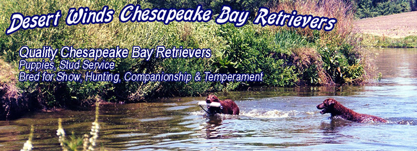 Desert Winds Chesapeake Bay Retrievers